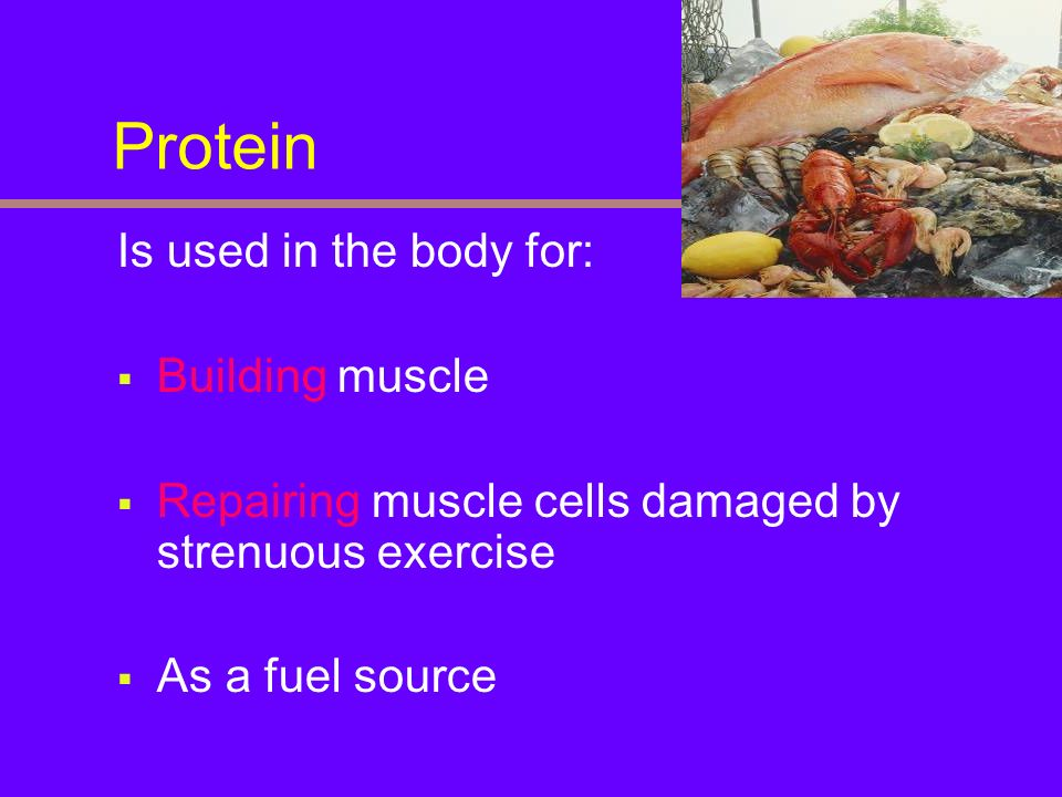 Protein Is used in the body for: Building muscle Repairing muscle cells damaged by strenuous exercise As a fuel source