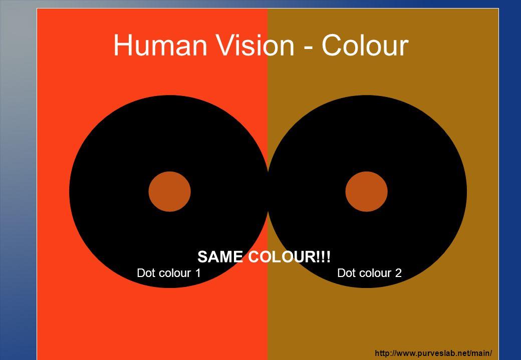 Human Vision - Colour http://www.purveslab.net/main/ Dot colour 1Dot colour 2 SAME COLOUR!!!