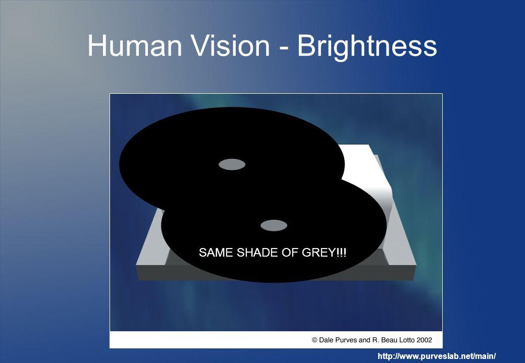 Human Vision - Brightness Grey and White http://www.purveslab.net/main/ SAME SHADE OF GREY!!!