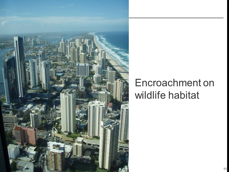 11 Encroachment on wildlife habitat