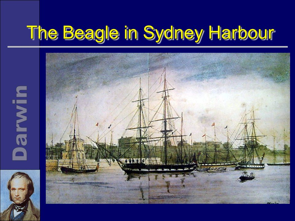 The Beagle in Sydney Harbour