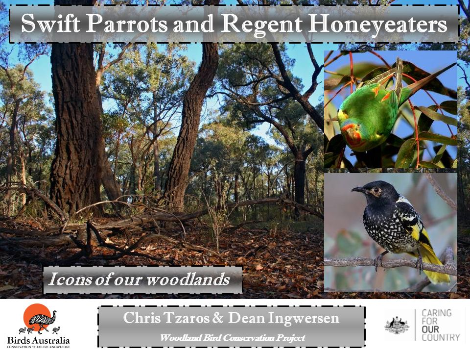 Chris Tzaros & Dean Ingwersen Woodland Bird Conservation Project Swift Parrots and Regent Honeyeaters Icons of our woodlands