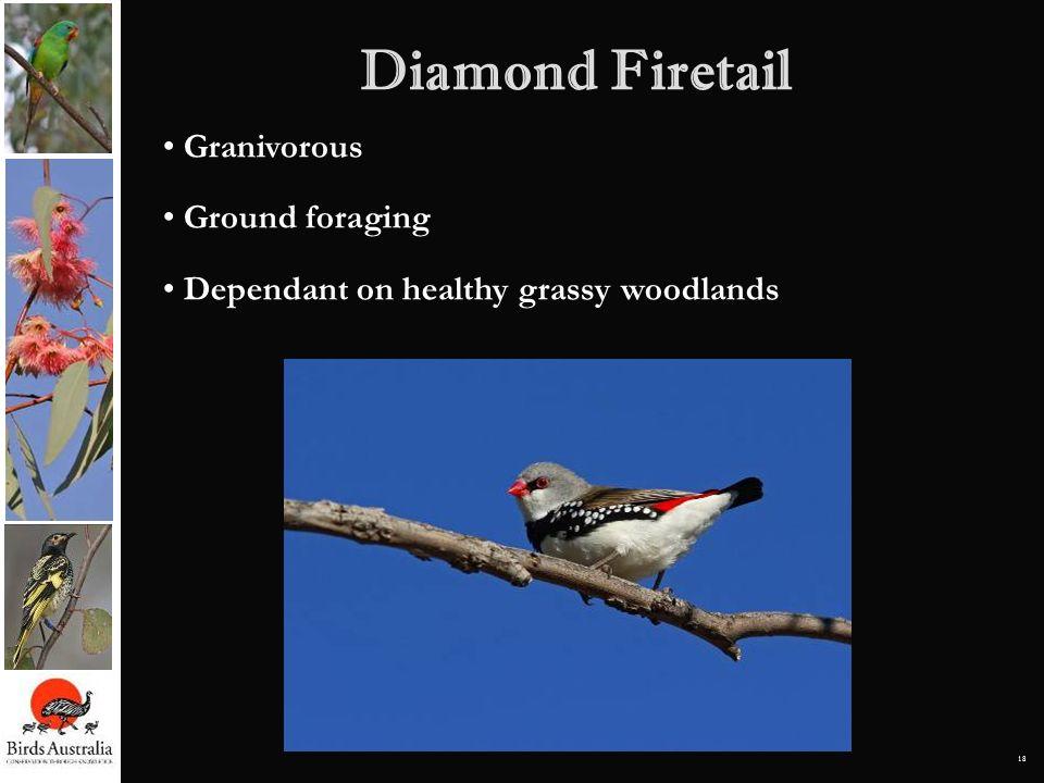 18 Diamond Firetail Granivorous Ground foraging Dependant on healthy grassy woodlands