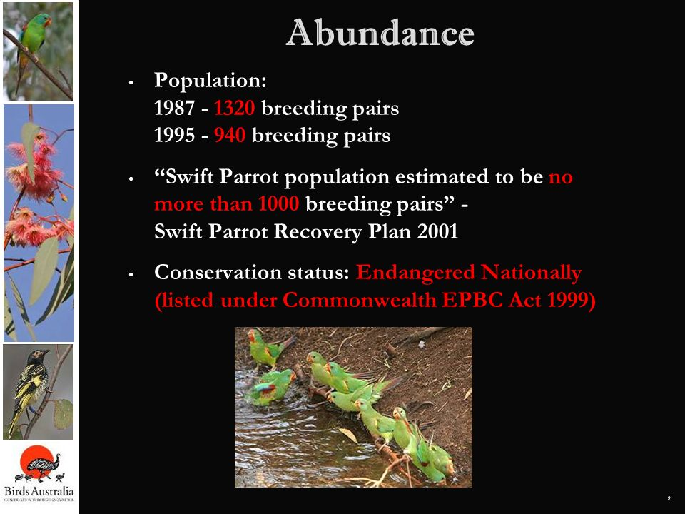 9 Population: 1987 - 1320 breeding pairs 1995 - 940 breeding pairs Swift Parrot population estimated to be no more than 1000 breeding pairs - Swift Pa
