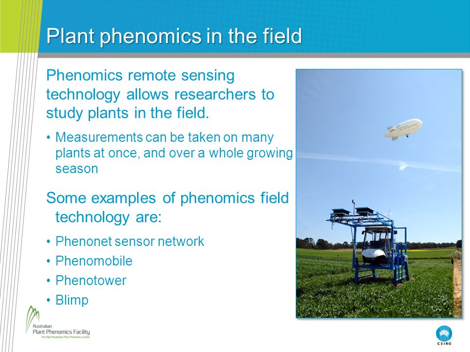 Plant phenomics in the field Phenomics remote sensing technology allows researchers to study plants in the field. Measurements can be taken on many pl