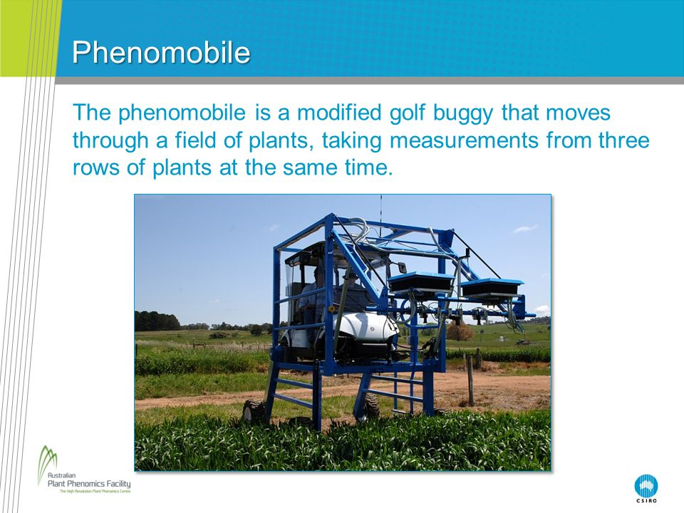 Phenomobile The phenomobile is a modified golf buggy that moves through a field of plants, taking measurements from three rows of plants at the same t