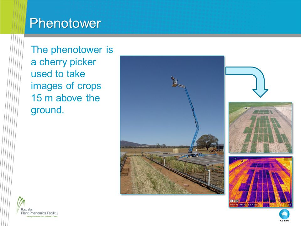 Phenotower The phenotower is a cherry picker used to take images of crops 15 m above the ground.