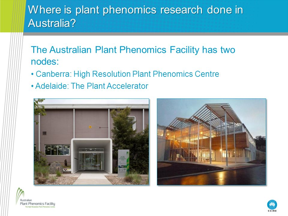 Where is plant phenomics research done in Australia? The Australian Plant Phenomics Facility has two nodes: Canberra: High Resolution Plant Phenomics