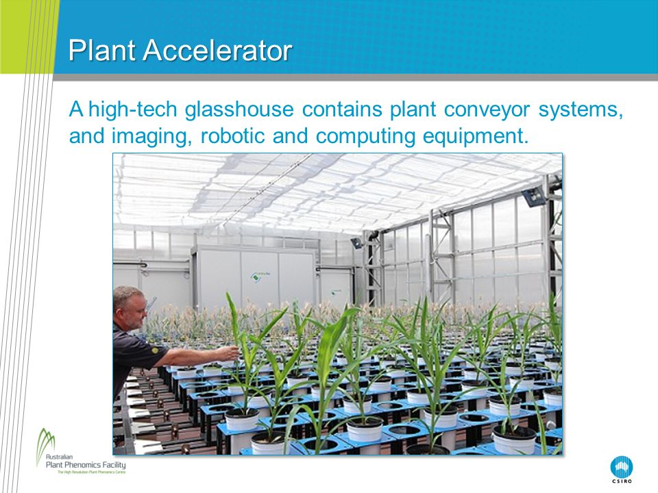 Plant Accelerator A high-tech glasshouse contains plant conveyor systems, and imaging, robotic and computing equipment.