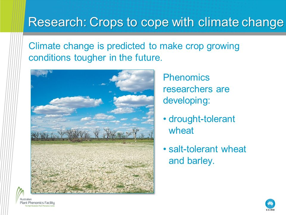 Research: Crops to cope with climate change Climate change is predicted to make crop growing conditions tougher in the future. Phenomics researchers a