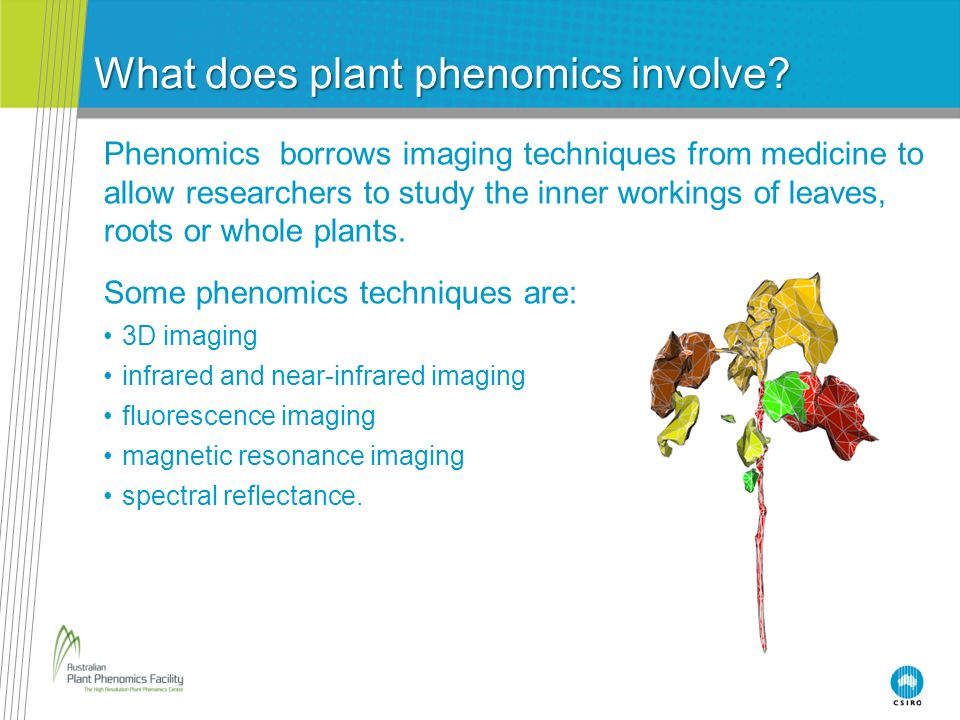 Three-dimensional (3D) imaging Digital photos of the top and sides of plants are combined into a 3D image.
