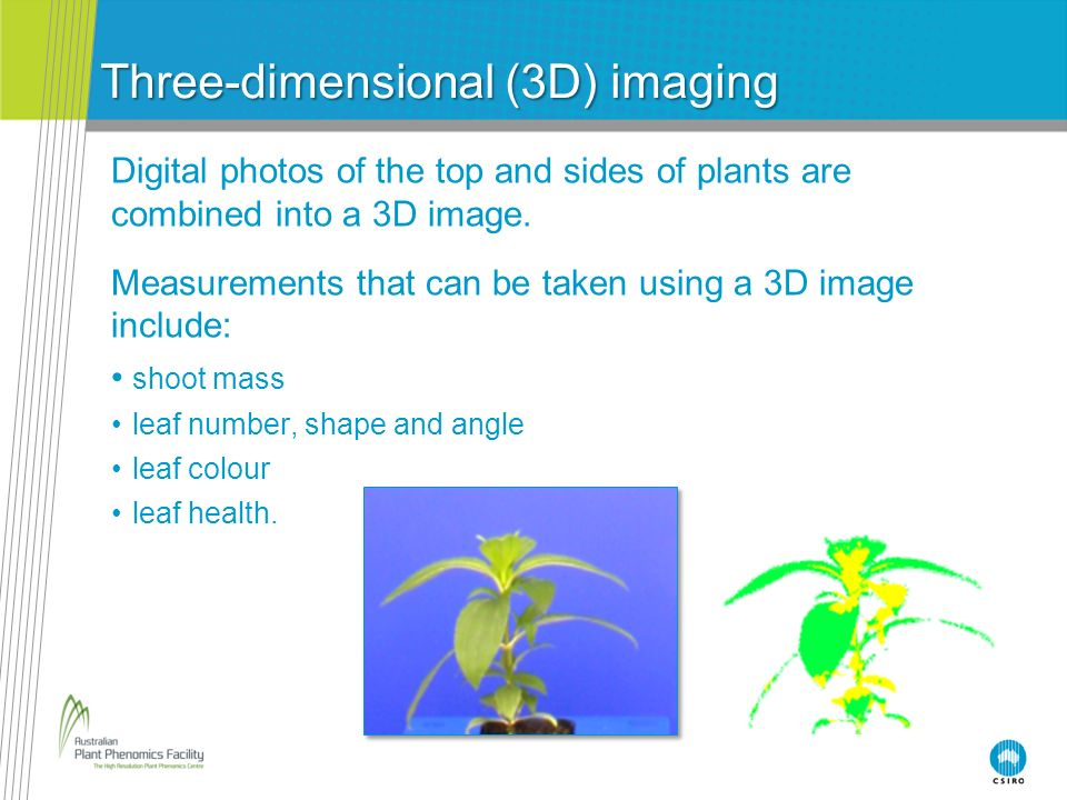 Three-dimensional (3D) imaging Digital photos of the top and sides of plants are combined into a 3D image. Measurements that can be taken using a 3D i