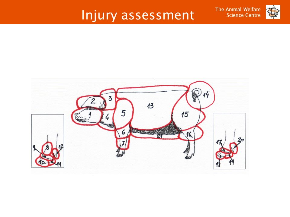 The Animal Welfare Science Centre Injury assessment