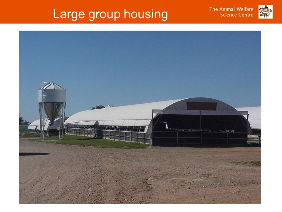 The Animal Welfare Science Centre Large group housing