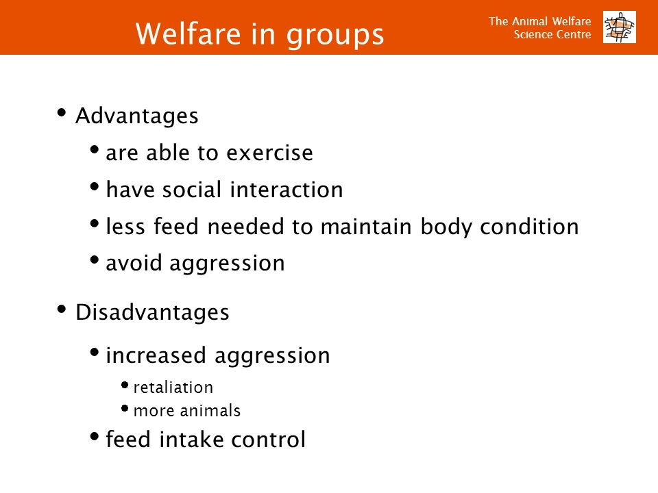 The Animal Welfare Science Centre Welfare in groups Advantages are able to exercise have social interaction less feed needed to maintain body conditio