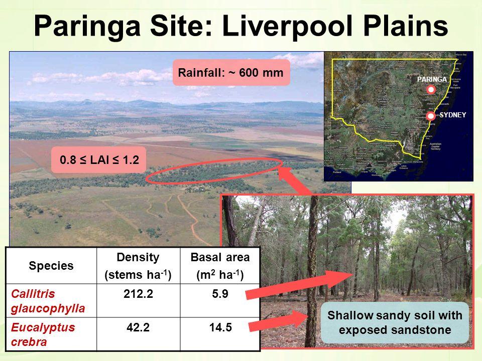 Paringa Site: Liverpool Plains 0.8 LAI 1.2 Rainfall: ~ 600 mm Shallow sandy soil with exposed sandstone Species Density (stems ha -1 ) Basal area (m 2
