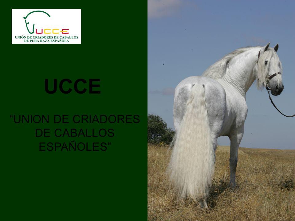 UCCE UNION DE CRIADORES DE CABALLOS ESPAÑOLES