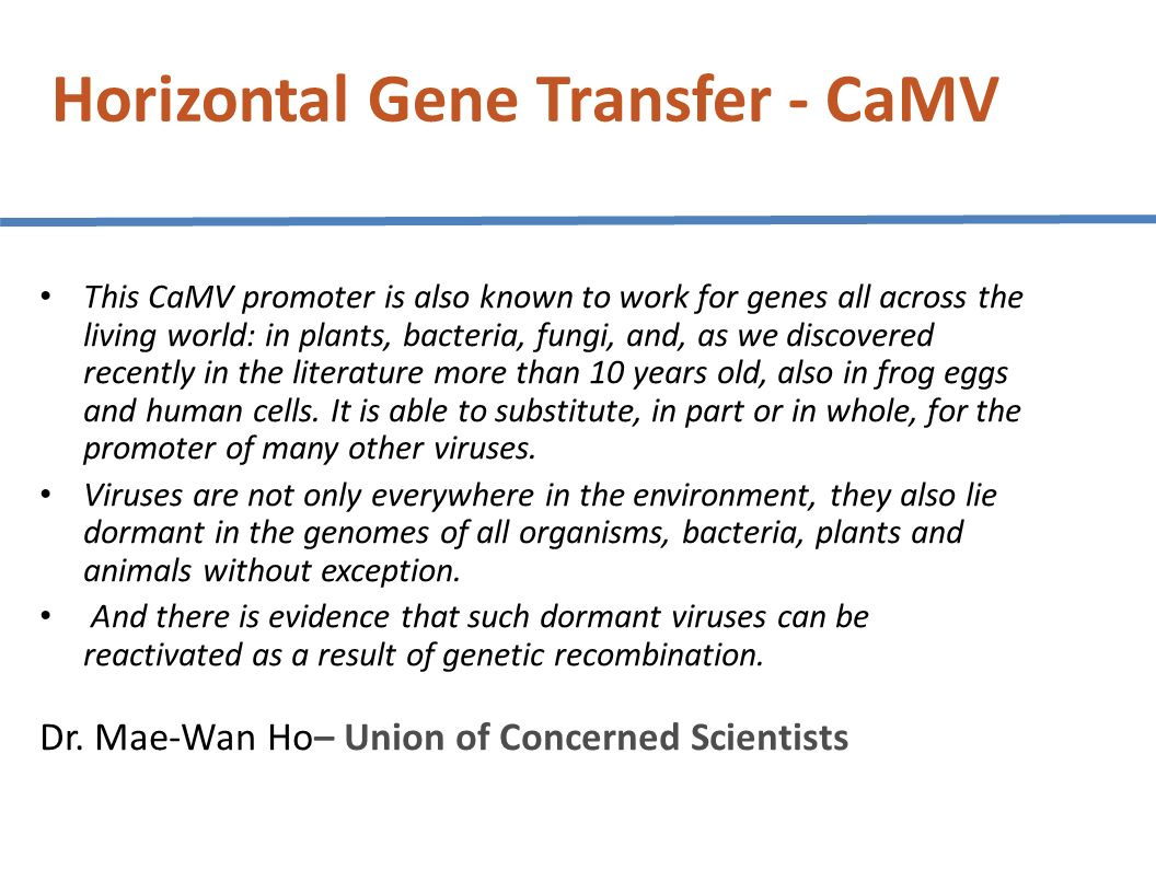 Horizontal Gene Transfer - CaMV This CaMV promoter is also known to work for genes all across the living world: in plants, bacteria, fungi, and, as we