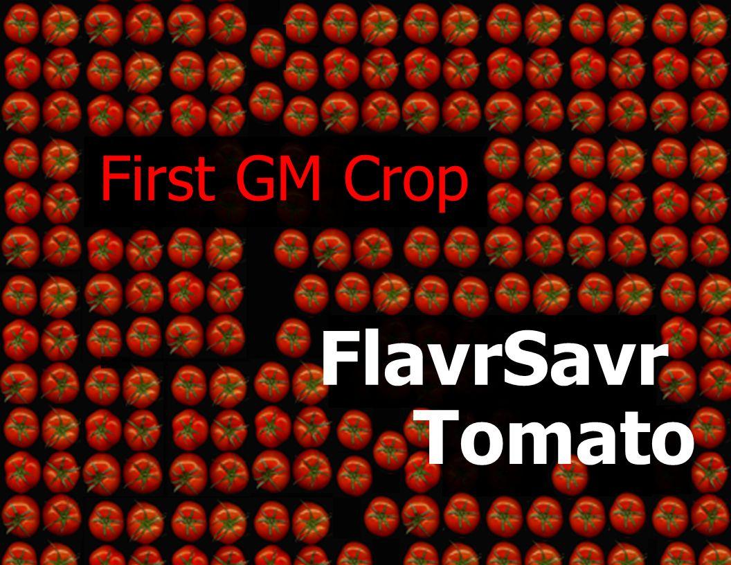 First GM Crop FlavrSavr Tomato
