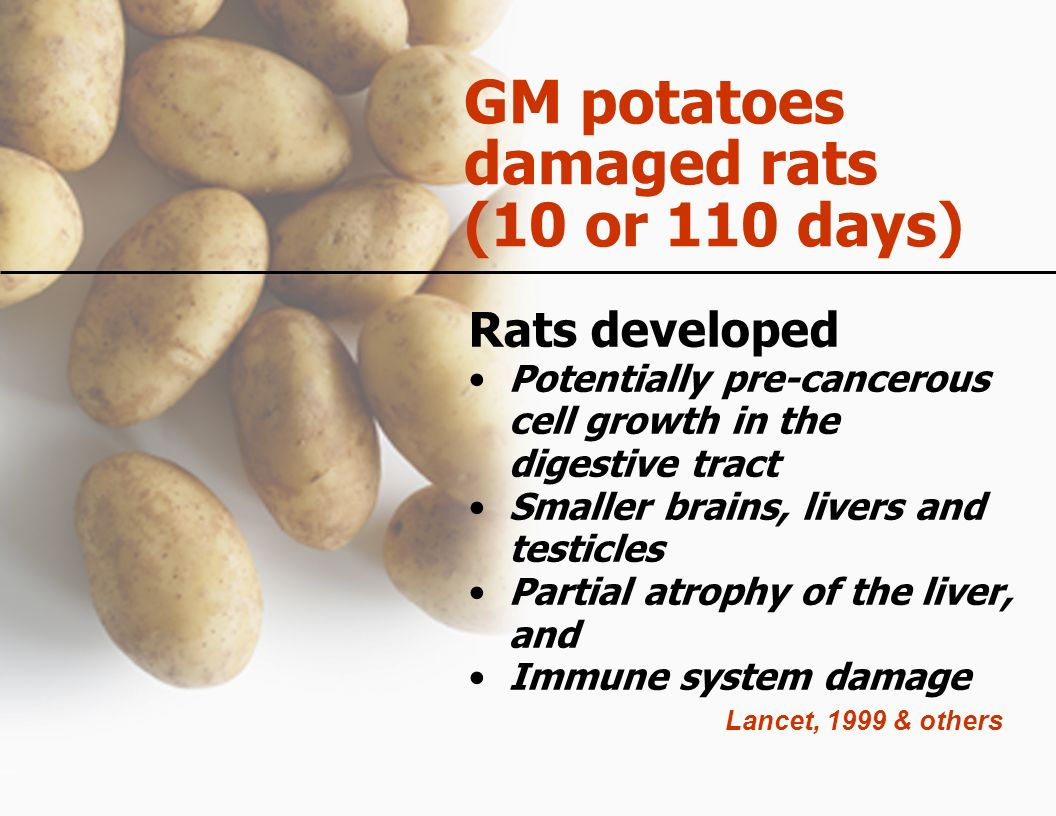 GM potatoes damaged rats (10 or 110 days) Rats developed Potentially pre-cancerous cell growth in the digestive tract Smaller brains, livers and testi