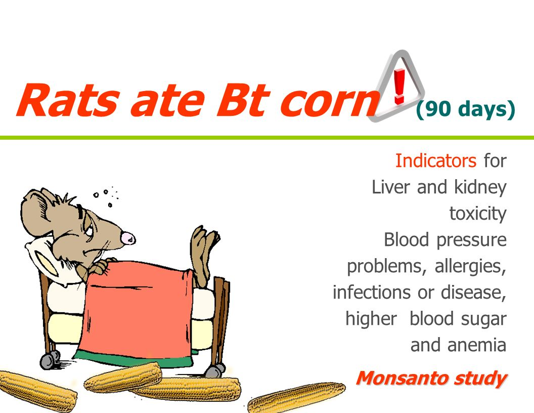 Rats ate Bt corn (90 days) Indicators for Liver and kidney toxicity Blood pressure problems, allergies, infections or disease, higher blood sugar and