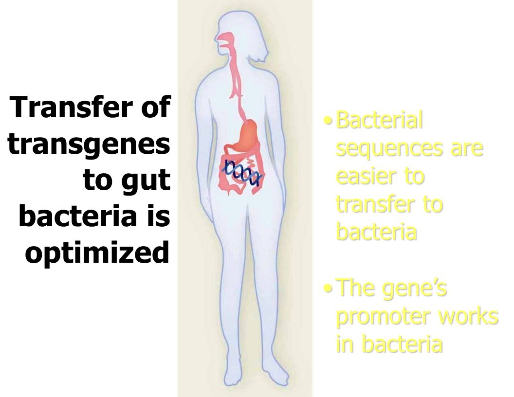 Transfer of transgenes to gut bacteria is optimized Bacterial sequences are easier to transfer to bacteriaBacterial sequences are easier to transfer t