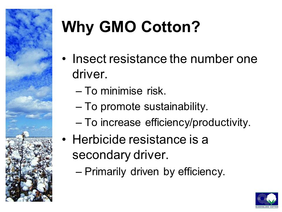 Why GMO Cotton. Insect resistance the number one driver.