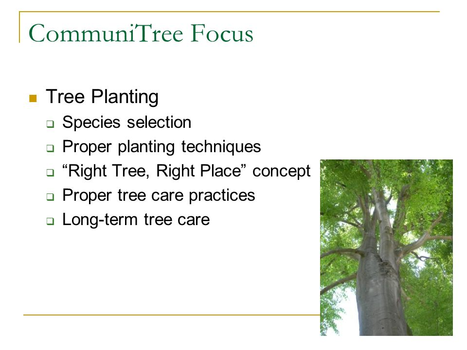 CommuniTree Focus Tree Planting Species selection Proper planting techniques Right Tree, Right Place concept Proper tree care practices Long-term tree care