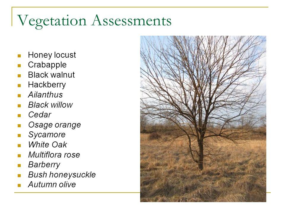 Vegetation Assessments Honey locust Crabapple Black walnut Hackberry Ailanthus Black willow Cedar Osage orange Sycamore White Oak Multiflora rose Barb