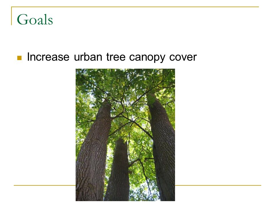 Goals Increase urban tree canopy cover