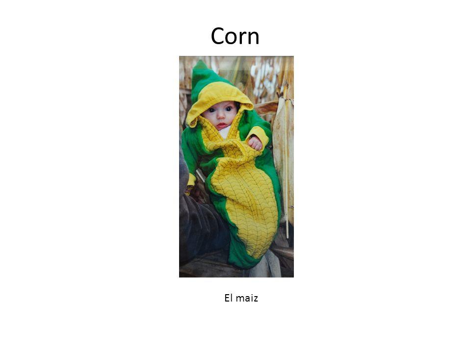 Corn El maiz