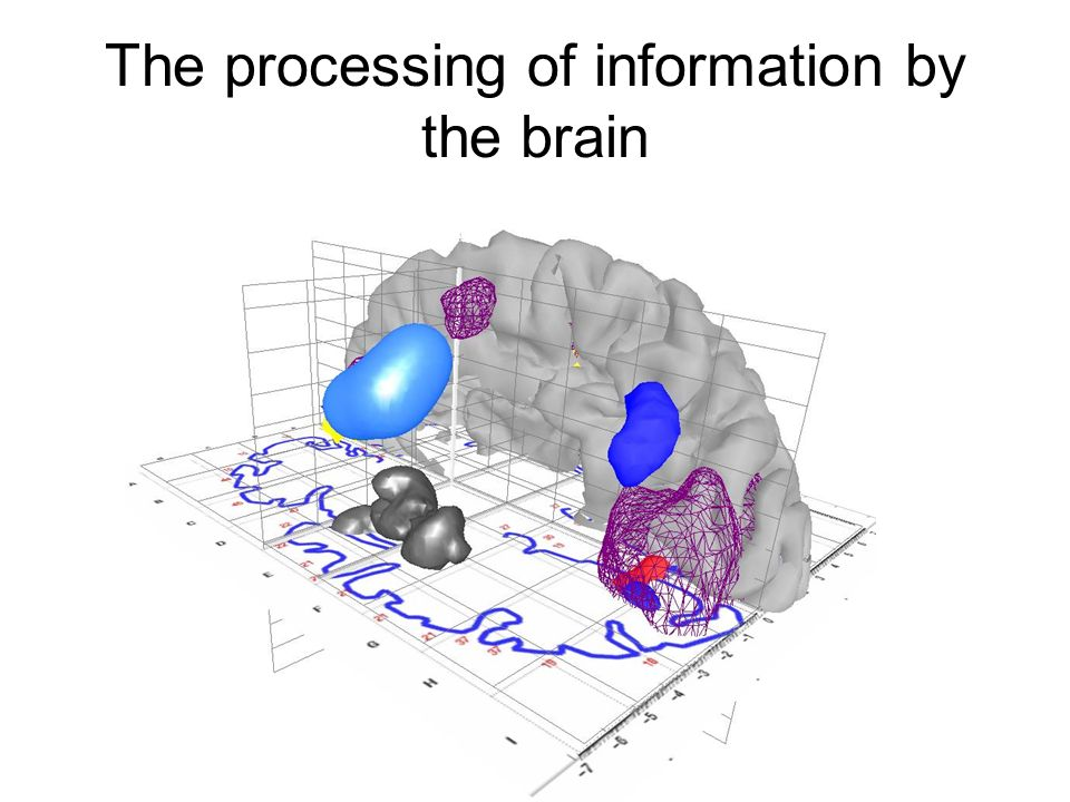 The processing of information by the brain