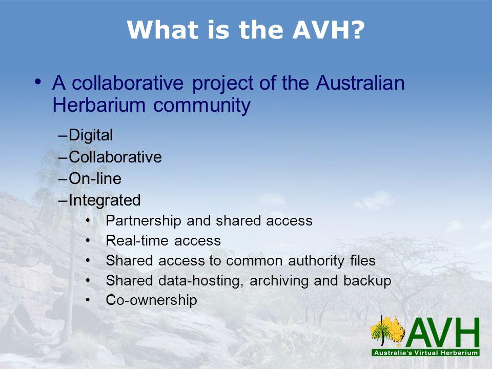 Where is the AVH.