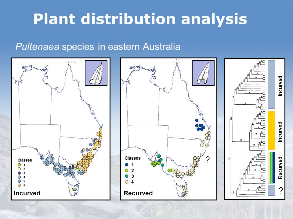 Incurved Recurved Plant distribution analysis ? Incurved Recurved Pultenaea species in eastern Australia ?