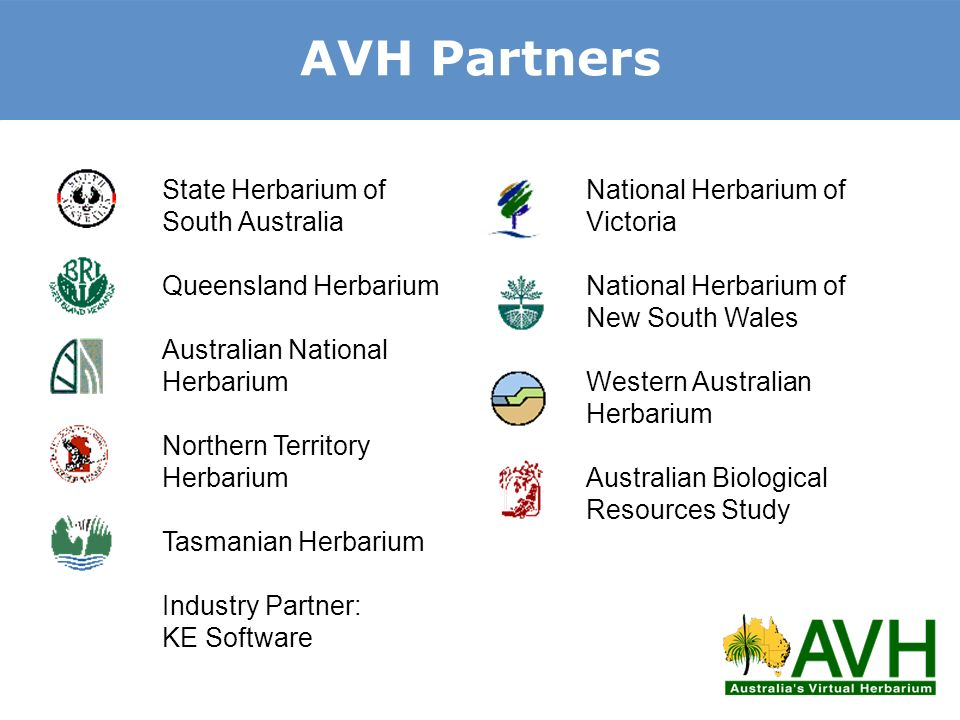 AVH Partners State Herbarium of South Australia Queensland Herbarium Australian National Herbarium Northern Territory Herbarium Tasmanian Herbarium In
