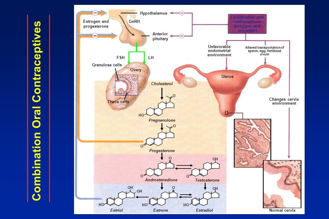 Estrogen and progesterone GnRH Hypothalamus Anterior pituitary Combination oral contraceptives (estrogen and progestin) FSHLH Granulosa cells Ovary Th