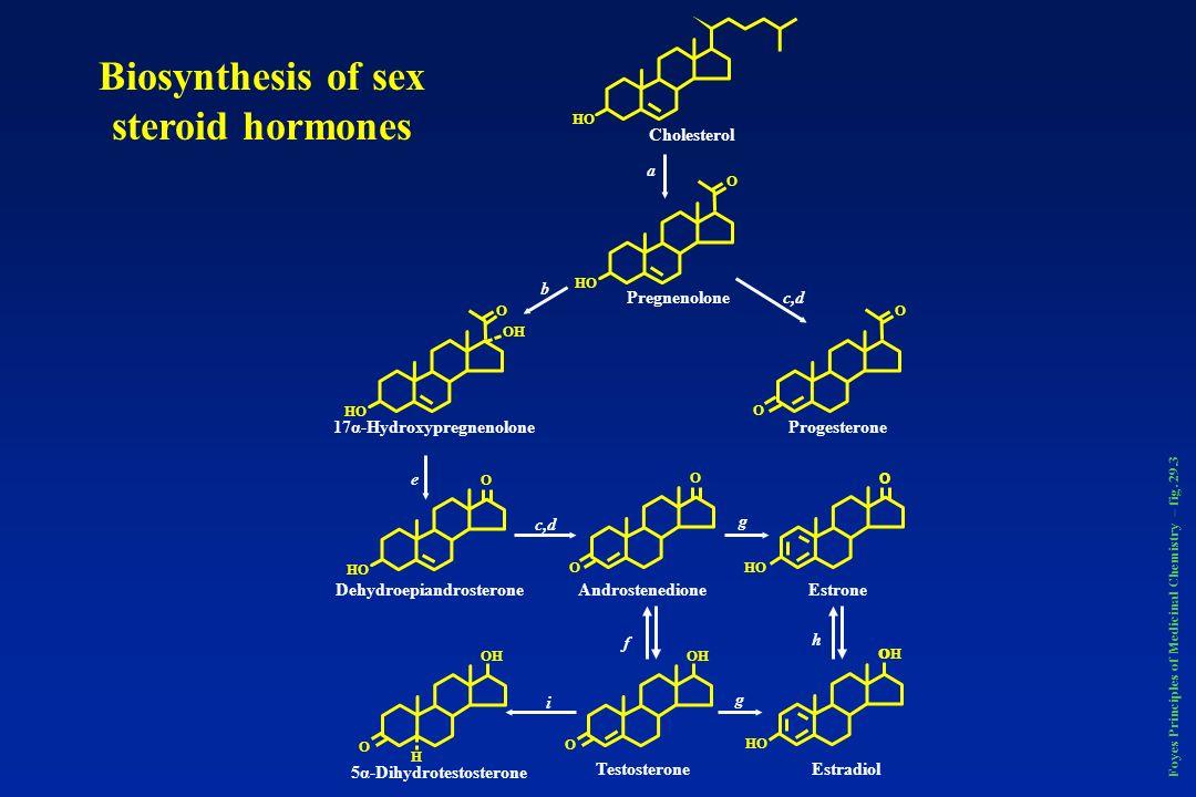 Foyes Principles of Medicinal Chemistry – fig. 29.3 HO Cholesterol O HO OH O O O Pregnenolone 17α-HydroxypregnenoloneProgesterone a b c,d HO O OO O O