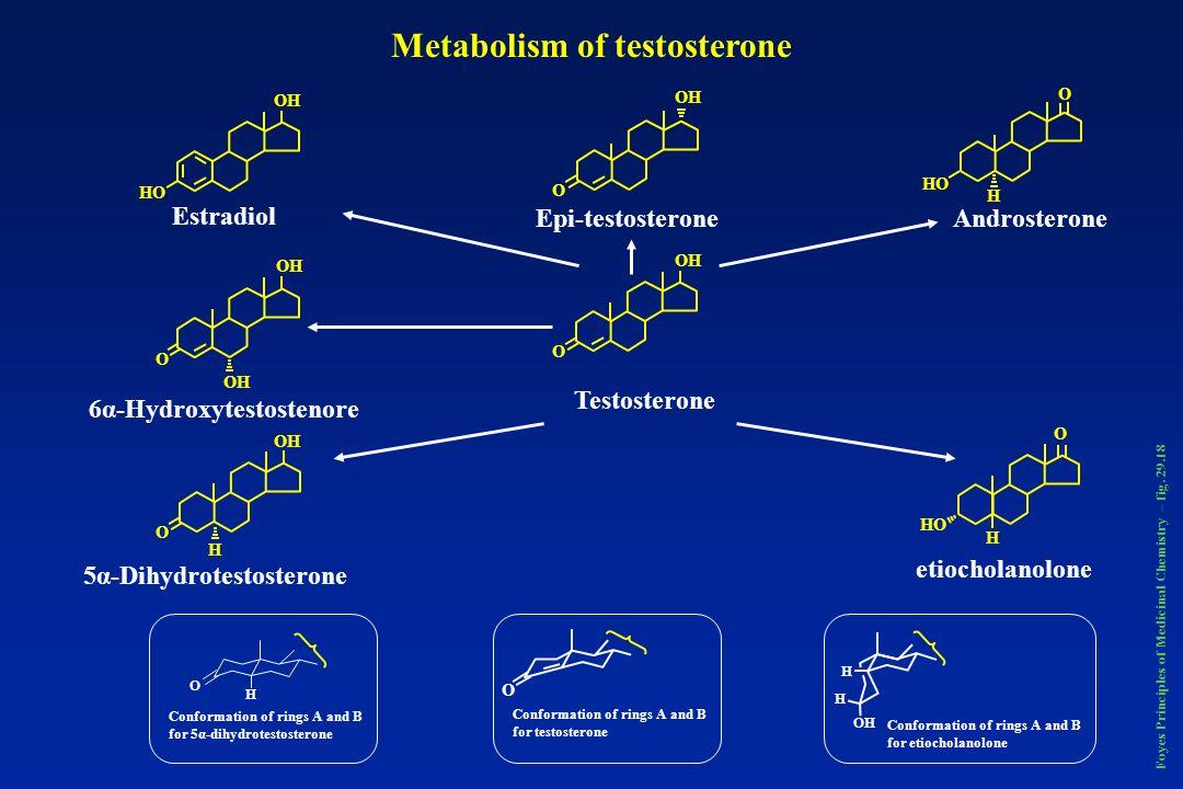 OH HO OH O HO H O OH HO OH H H O O O O Testosterone Epi-testosteroneAndrosterone Estradiol 6α-Hydroxytestostenore 5α-Dihydrotestosterone etiocholanolo