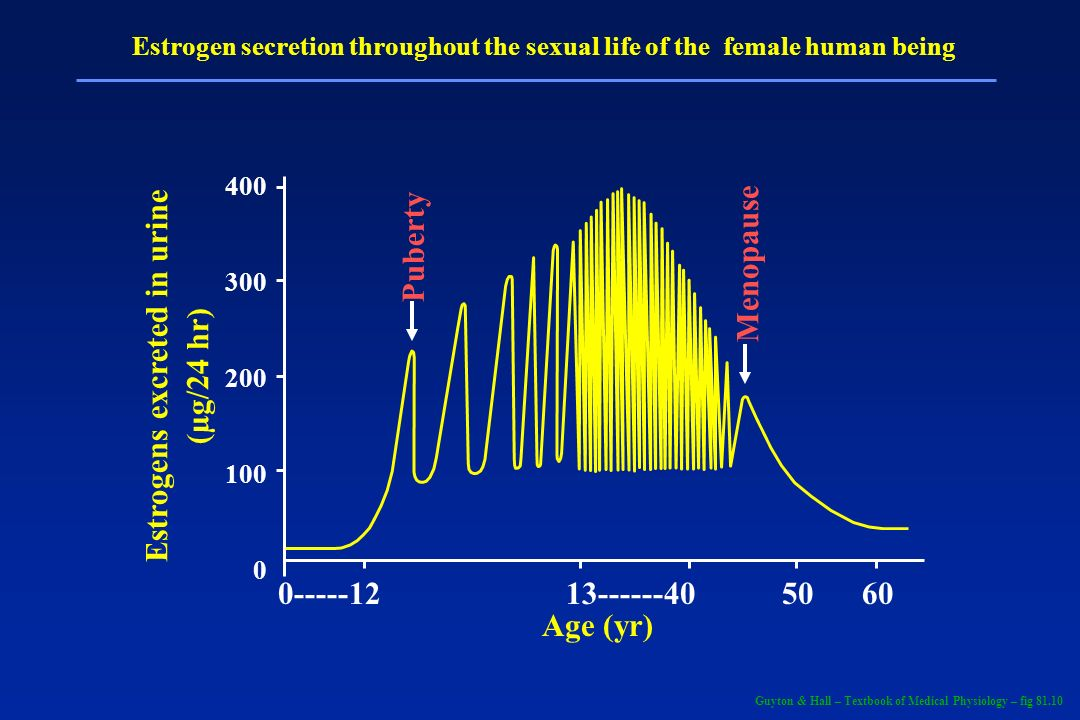 Puberty Menopause 400 300 200 100 0 0-----1213------4050 60 Age (yr) Estrogens excreted in urine (µg/24 hr) Estrogen secretion throughout the sexual l