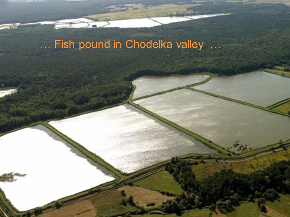 … Fish pound in Chodelka valley …