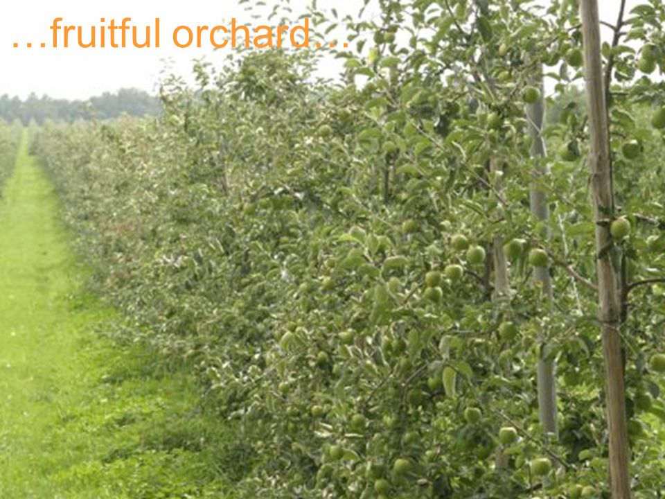 …fruitful orchard…