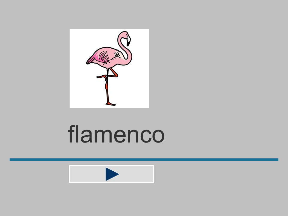 flamenc c a l m f n e o ? flamenco