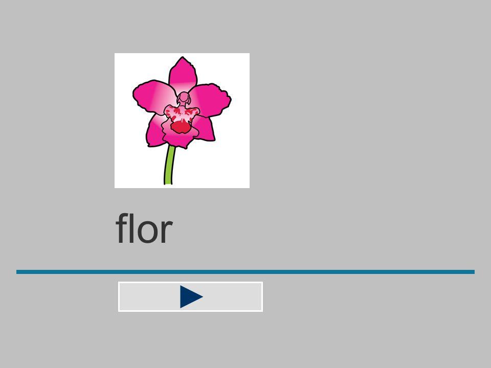 flo f r v o l a ? flor