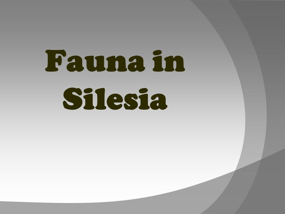 Fauna in Silesia