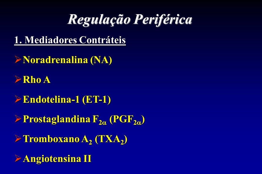 Regulação Periférica 1. Mediadores Contráteis Noradrenalina (NA) Noradrenalina (NA) Rho A Rho A Endotelina-1 (ET-1) Endotelina-1 (ET-1) Prostaglandina