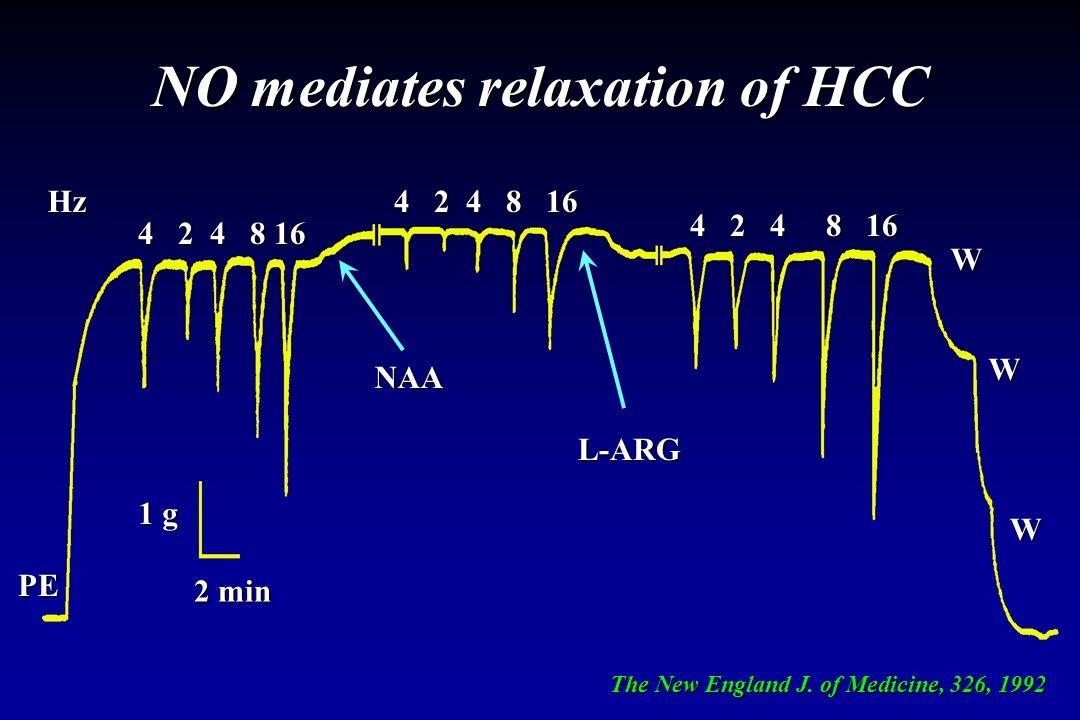 NO mediates relaxation of HCC 4 2 4 8 16 W W W 1 g 2 min Hz PE NAA 4 2 4 8 16 L-ARG The New England J. of Medicine, 326, 1992