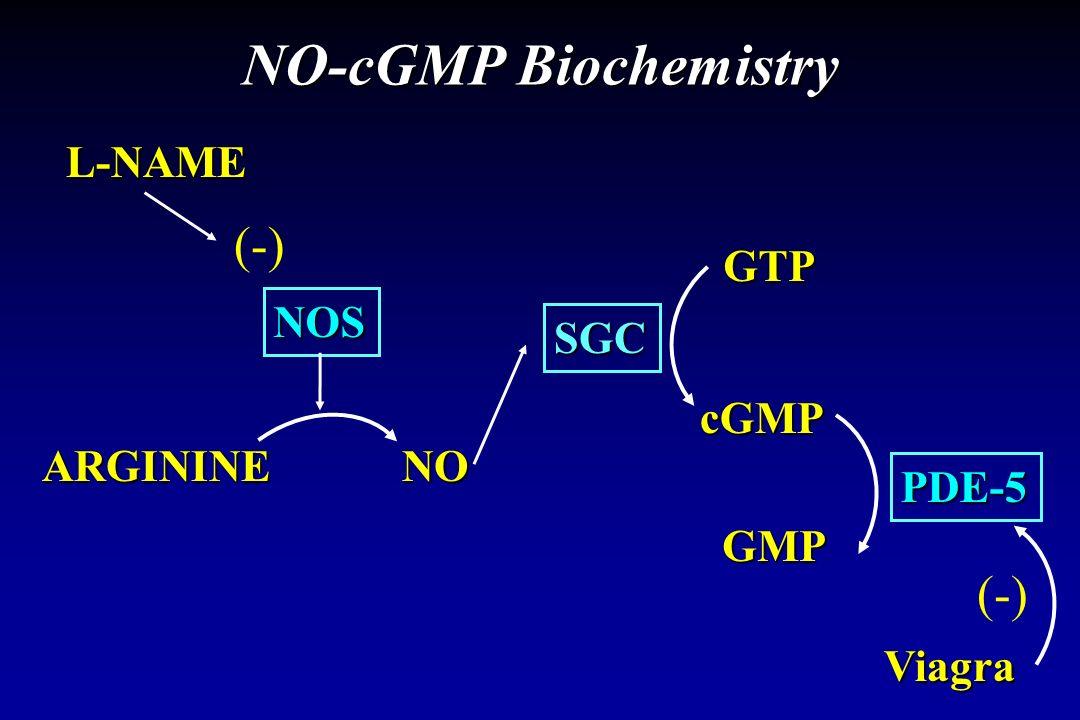 NO-cGMP Biochemistry L-NAME NOS ARGININENO SGC cGMP GTP PDE-5 (-) Viagra GMP