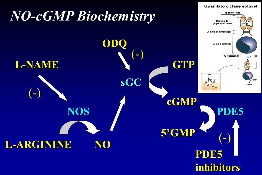 NO-cGMP Biochemistry L-NAME NOS L-ARGININENO sGC cGMP GTP PDE5 (-) PDE5inhibitors 5GMP ODQ