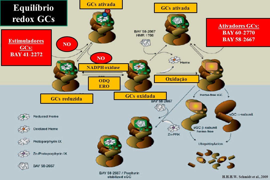 GCs reduzida GCs ativada GCs oxidada Ativadores GCs: BAY 60-2770 BAY 58-2667 ODQ ERO NADPH oxidase Estimuladores GCs: BAY 41-2272 Equilíbrio redox GCs
