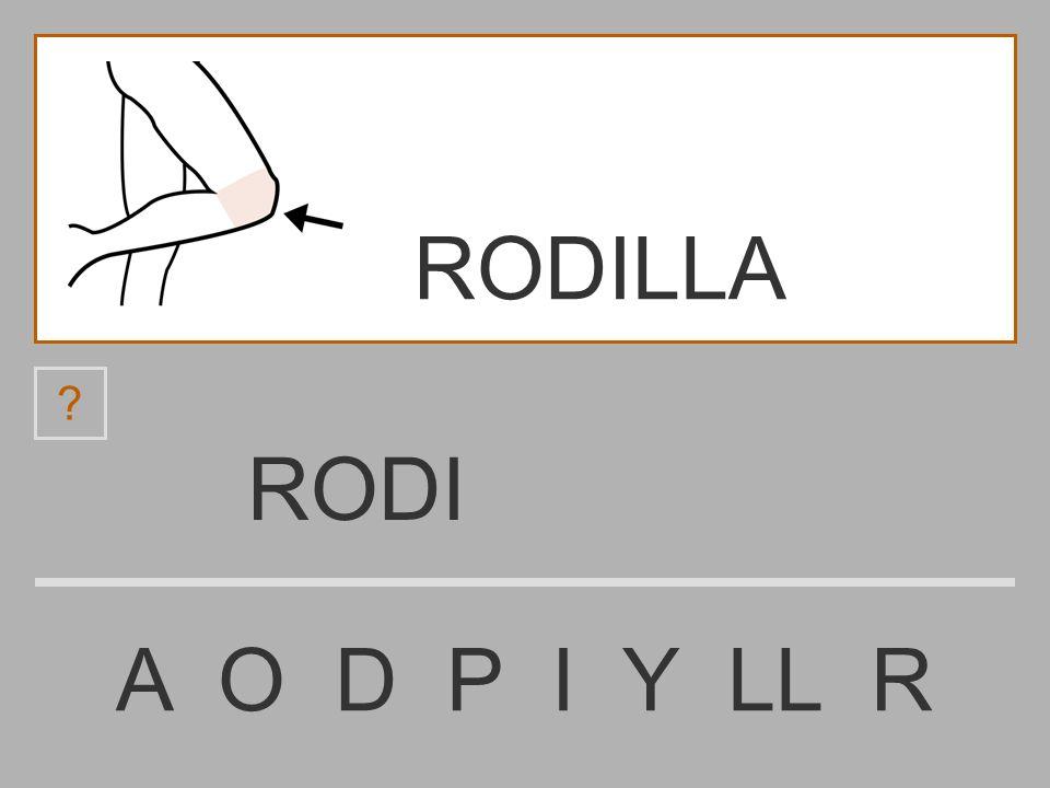 ROD A O D P I Y LL R ? RODILLA